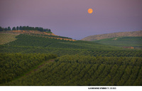 Moonrise over grape vineyards in eastern Washington
