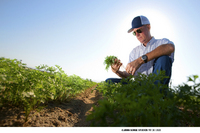 Checking the carrot crop near Bakersfield, California