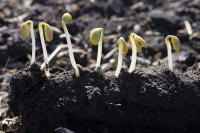 Soybeans on the rise