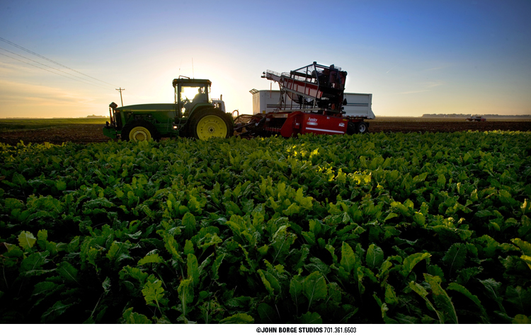 Early morning sugar beet harvest in North Dakota : agriculture : JOHN BORGE STUDIOS Fargo North Dakota Photography Advertising, Public Relations